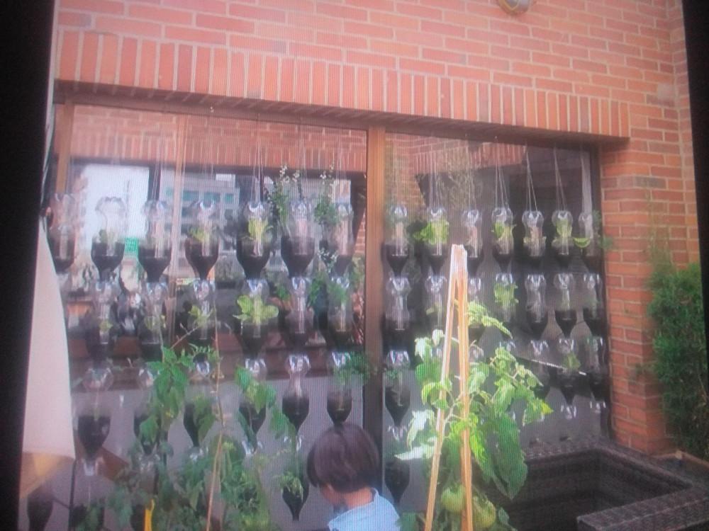 PET bottles green wall